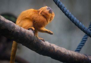 Zoológico de São Paulo oferece visitas monitoradas a estudantes