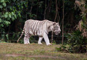 Deficientes podem participar de visitas especiais no Zoológico de São Paulo