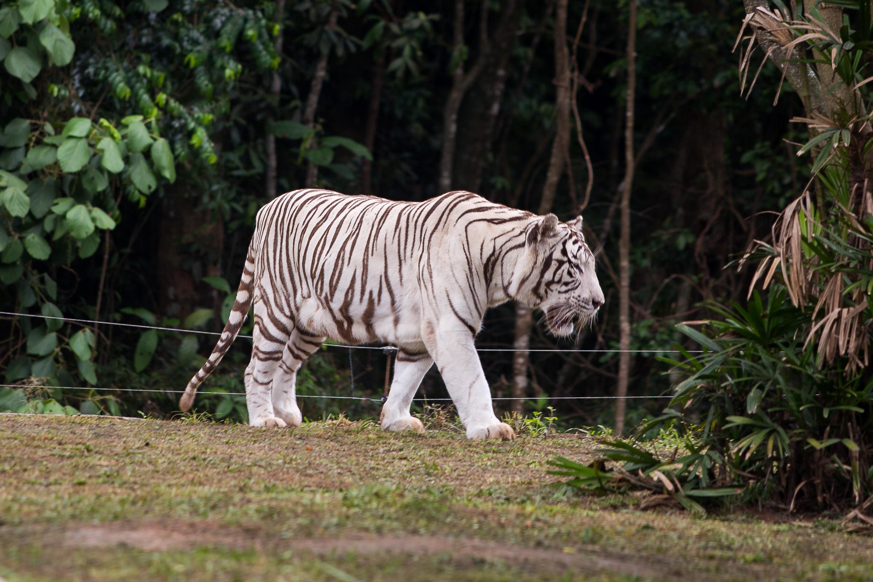 Fotos do Zoológico de São Paulo, localizado na Zona Sul da cidade de São Paulo. Data: 15/12/2016  Local: São Paulo/SP  Foto: Daniel Guimarães/A2IMG