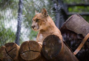Escolas podem agendar visitas especiais no Zoológico de São Paulo